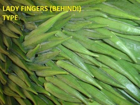 Fresh Indian Okra, packed in 5kg plastic, or 4kg carton box.
